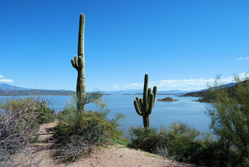 Cactus by the Lake