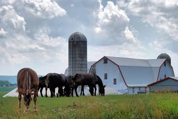 The Farm Horse