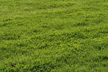 Rasen im Frühling