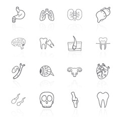 Vector set of contour icons of internal human