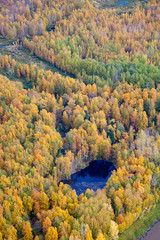 Top view of forest in autumn