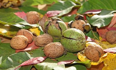 noix et feuilles mortes