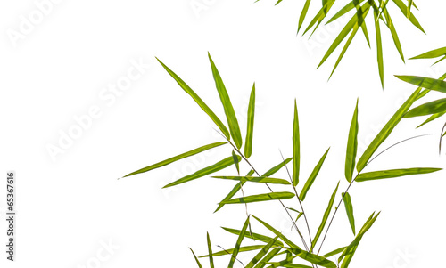 Foto op Plexiglas Bamboe bamboo leaves isolated on white background, clipping path includ