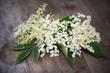 Holunder, Blüten