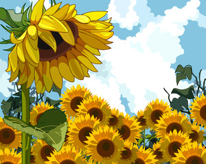sunflower on the background of sunflowers