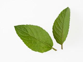 ブラックペパーミントの葉2枚