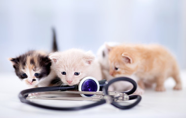 young  kittens with a stethoscope