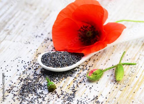 Mohnblume mit Samen