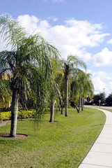 Palm trees in Weston Fort Lauderdale Florida