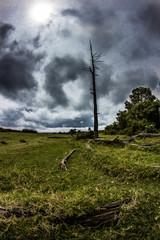 Toter Baum in Afrika