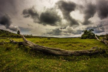 Toter Baum Panorama