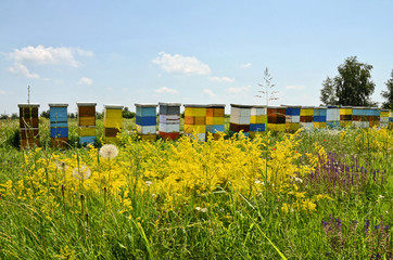 Beehives in a field of wild flowers