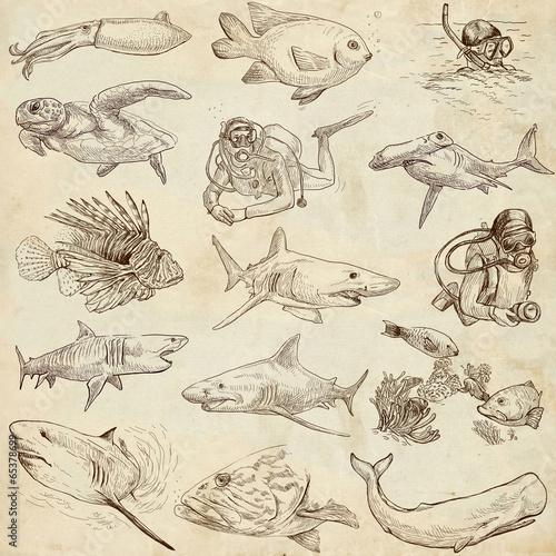Fototapeta Underwater 1 - hand drawings on old paper