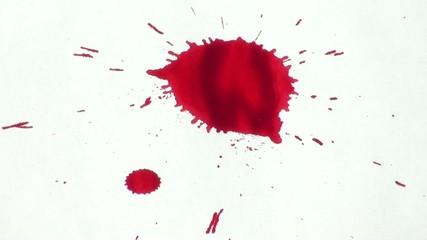 Pingas Vermelhas