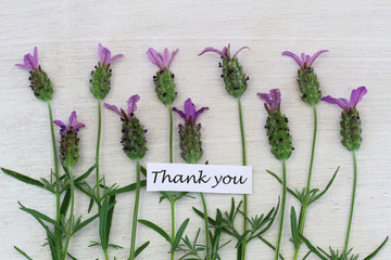Thank you card with fresh lavender