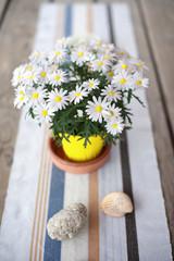 Margarite auf dem Holztisch