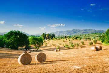 Tuscany landscape, summer