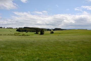 Frühlingswiese im Ostallgäu