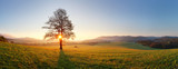 Fototapety Alone tree on meadow at sunset with sun and mist - panorama
