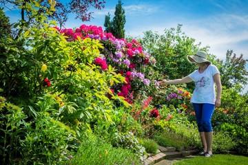 großer Rhododendron im Garten