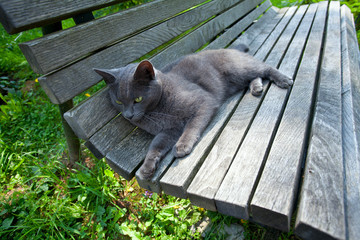 grey cat on wooden bench