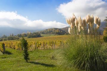 Pampasgras im Spätherbst in den Französischen Alpen
