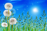 green grass on blue sky background - 65391291
