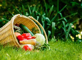frisches geerntetes Gemüse im Garten