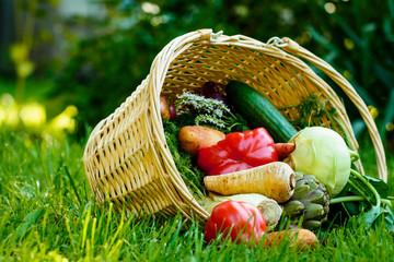 Korb mit frischem Gemüse im Garten