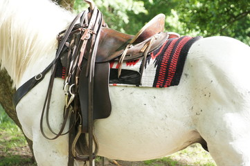 White horse with saddle