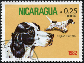 Stamp printed in NICARAGUA shows image of a English Setter