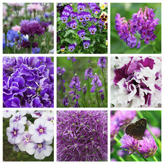 Collage with nine violet flowers
