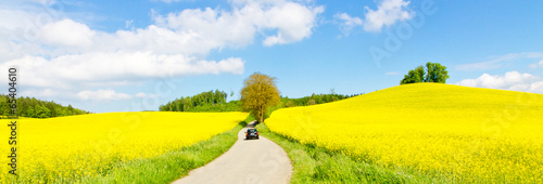 Fotobehang Cultuur Way to the rape field