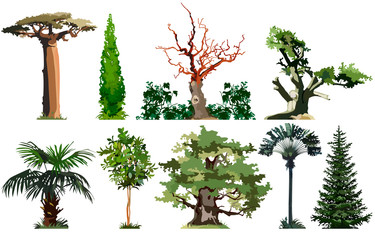 Trees, baobab, cypress, palm, oak, spruce, set