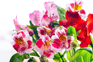 Bouquet of alstromeria