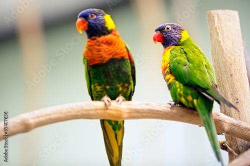 Tuinposter Papegaai Pair Parrot
