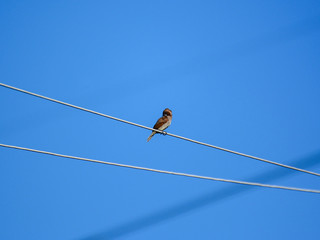 bird standing on electrical line with blue sky