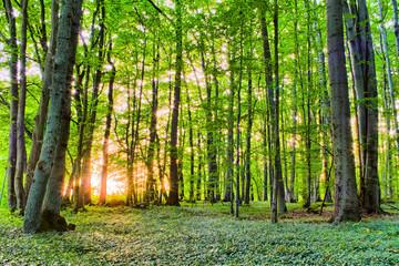 Spring Forrest Sunset