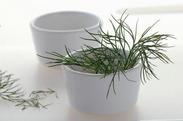 Dill (Anethum graveolens) in der Tasse