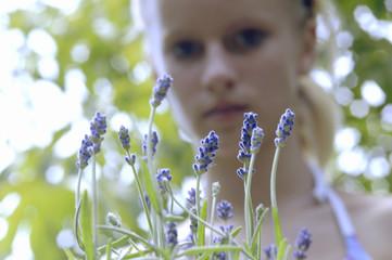 Frische Lavendelblüten