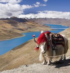 Tibet - Yamdrok Lake - Tibetan Plateau