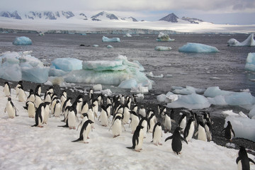 Penguins - Antarctica