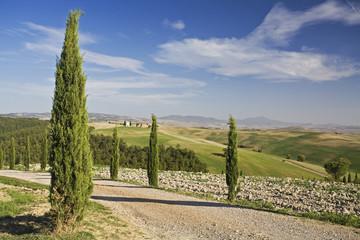 Italien, Toskana, Zypressen rahmen Straße ein