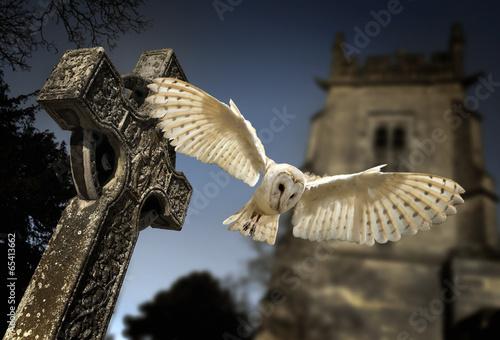 Spoed canvasdoek 2cm dik Uil Barn Owl (Tyto alba)