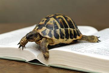Schildkröte auf aufgeschlagenem Buch