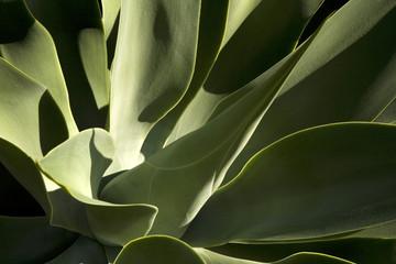 Spanien, Lanzarote, Pflanze