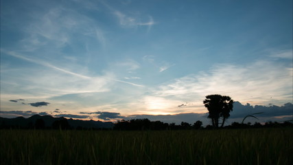 Sky clouds over rice field with timelapse