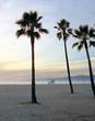 USA, Palmen am Strand von Los Angeles