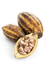 Kakaopflanze, geschlossen und geöffnet, Kakaobohnen
