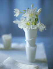 Eucharis in Vase